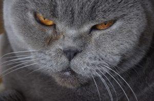 Kočka se zlobí