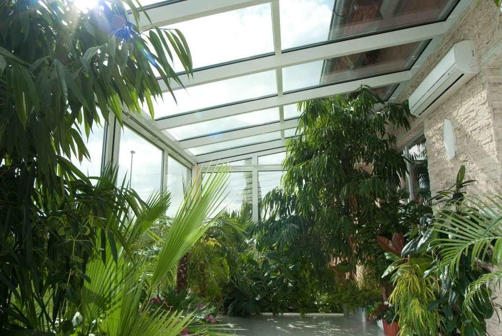 Zimní zahrada tropy