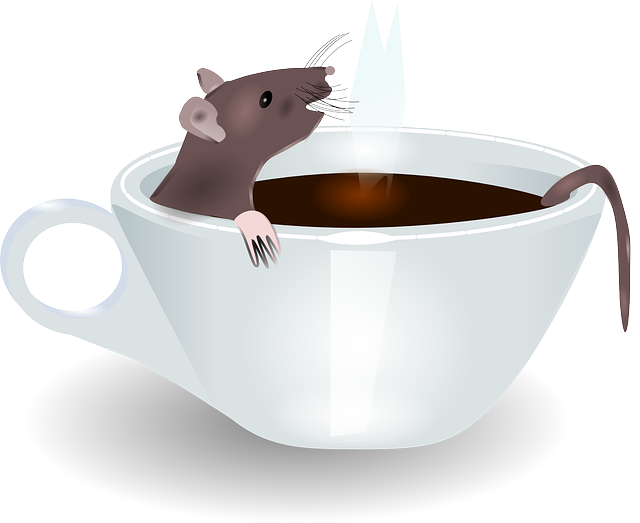 Výsledek obrázku pro potkan domácí mazlíček